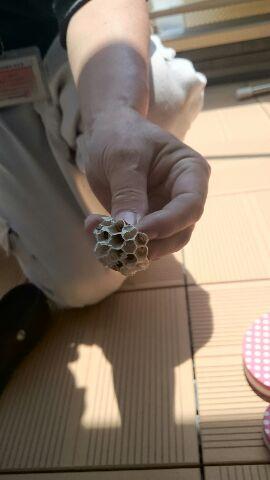 新築バルコニー蜂の巣駆除