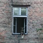 戸建小窓カーテン選び方失敗後悔注意点と成功のコツ