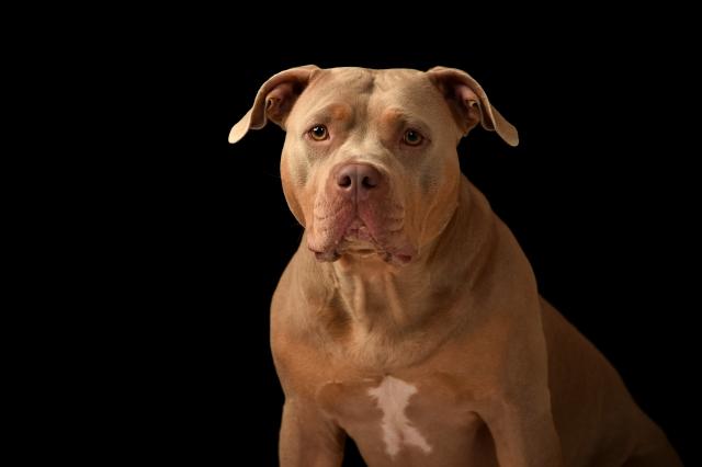 「犬がいます」などの張り紙などで被害をおさえる