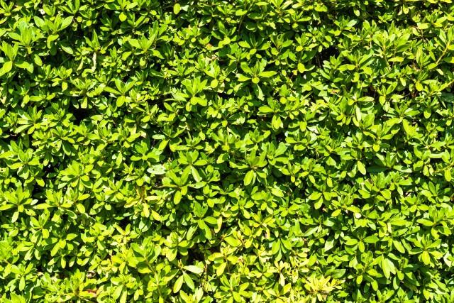 外構目隠しに植栽を使った場合の維持費とは?