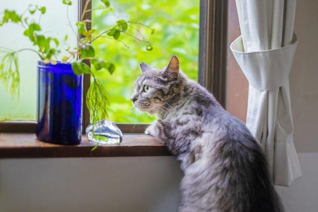 新築ウッドデッキ必要性がデメリットになるケース 猫、害虫駆除
