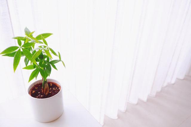 新築祝い失敗しやすい商品 観葉植物
